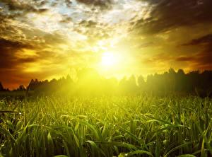 Картинка Поля Небо Рассветы и закаты