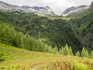 Картинка Франция Горы Альпы Мох Ель Berge Природа