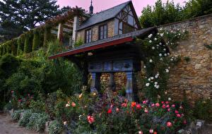 Обои Германия Дома Сады Роза Кусты Eltville Природа