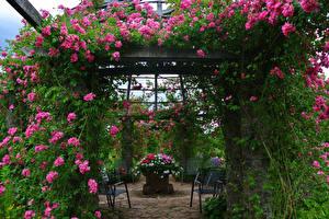 Фотографии Германия Парки Розы Кусты Darmstadt Park Rosenhoehe Природа
