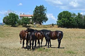 Фото Лошади Животные