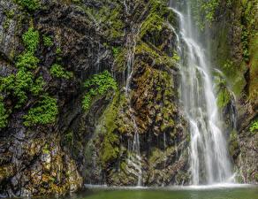 Фотографии Япония Киото Водопады Скала Мох
