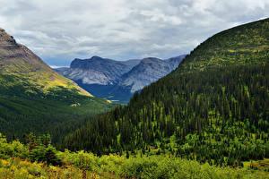 Картинка Горы Леса Альпы