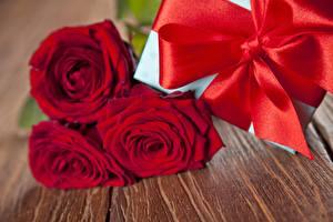 Фотографии Розы Бантик Цветы