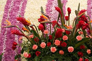 Фотографии Розы Гвоздики Хризантемы