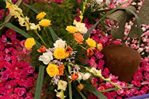 Фото Розы Тюльпаны Гвоздики Антирринум Pasadena
