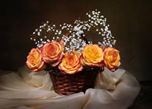 Фотографии Розы Корзина Цветы