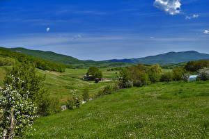 Фото Россия Крым Пейзаж Поля Цветущие деревья Холмы Трава