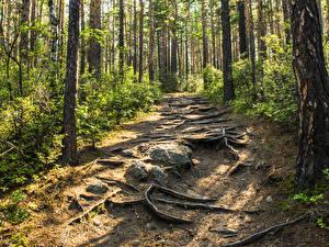 Фотография Россия Сибирь Леса Камень Деревья Тропинка Baikal