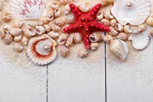Картинки Ракушки Морские звезды Жемчуг