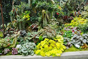 Обои Сингапур Сады Колеус Каладиум Gardens by The Bay Природа