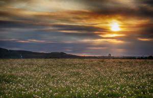 Картинка Рассветы и закаты Поля Одуванчики Природа