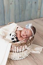 Фото Мишки Корзинка Младенцы Спит ребёнок
