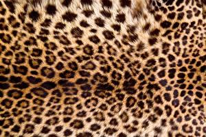 Картинки Текстура Леопарды