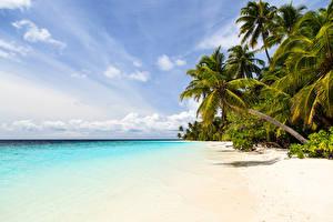 Фото Тропики Берег Небо Пальмы Природа