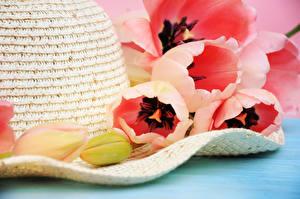 Картинка Тюльпаны Бутон Шляпа Цветы