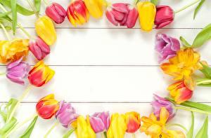 Фотографии Тюльпаны Доски