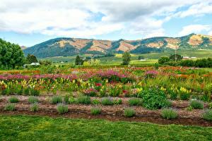 Картинки Штаты Поля Холмы Кусты Hood River Oregon Природа