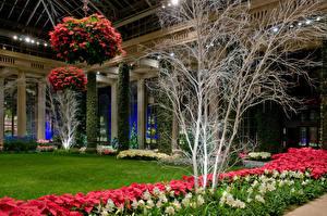 Фотография США Сады Амариллис Газон Longwood Gardens Природа