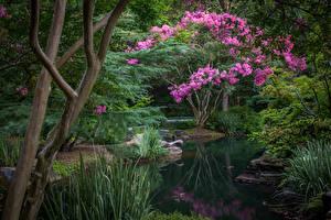 Фотографии Штаты Сады Пруд Цветущие деревья Кусты Gibbs Gardens Природа