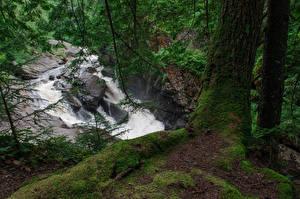 Обои США Водопады Ветвь Мох Ствол дерева Auger Falls Природа