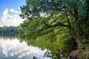 Фотографии Украина Парки Речка Деревья Trostianets Природа