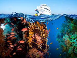 Фотография Подводный мир Кораллы Рыбы