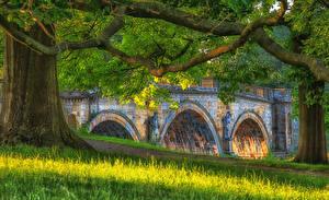 Обои Великобритания Мосты Скульптуры Ветвь Траве Chatsworth Природа