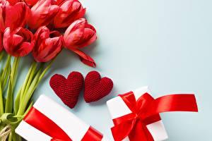 Фотографии День всех влюблённых Тюльпаны Сердечко Цветы