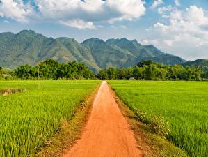 Фотография Вьетнам Гора Поля Дороги Mai Chau Природа