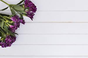 Фотографии Альстрёмерия Доски Фиолетовый Цветы