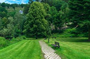 Фото Бельгия Парки Газон Скамья Деревьев Laroche Luxemburg Природа