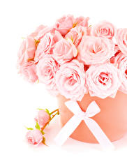 Картинка Букеты Розы Белый фон Розовый Бантик Цветы