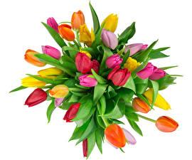 Картинки Букеты Тюльпан Белом фоне Разноцветные Цветы