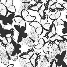 Фотография Бабочки Текстура Черно белое