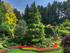 Картинка Канада Сады Дизайн Ель Деревья Butchart Gardens British Columbia