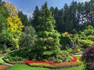 Картинка Канада Сады Дизайн Ель Дерево Butchart Gardens British Columbia Природа