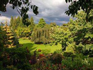 Картинка Канада Парк Дизайн Кустов Дерево Газоне Queen Elizabeth Park Природа