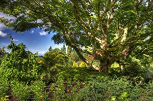 Фотография Канада Парки HDR Деревья Кусты Queen Elizabeth Park Природа