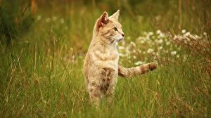 Картинки Коты Трава