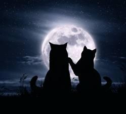 Картинки Кошка Любовь Луна Силуэт Две животное