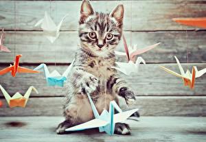 Картинки Коты Доски Котенок Оригами Животные