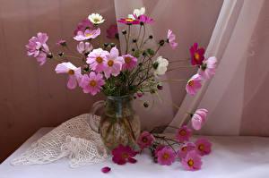 Фото Космея Ваза Розовый Цветы