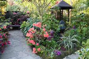 Картинки Англия Сады Рододендрон Собаки Скульптуры Walsall Garden Природа