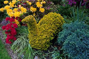 Фотографии Англия Сады Рододендрон Дизайн Кусты Walsall Garden Природа