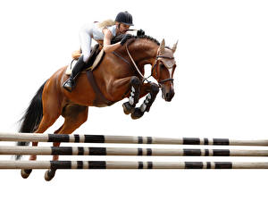 Фотография Конный спорт Лошади Прыжок Шлема Белый фон спортивная Девушки