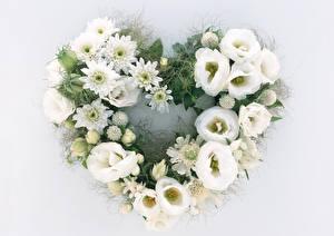 Фотографии Лизантус Хризантемы Серый фон Дизайн Сердца Белых цветок