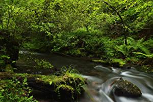Обои Леса Камень Ручей Мох Природа