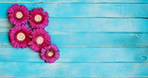 Картинки Герберы Доски Цветы