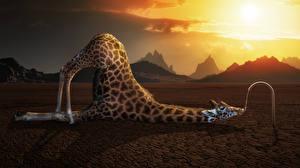 Фотографии Жирафы Смешные 3D Графика Юмор